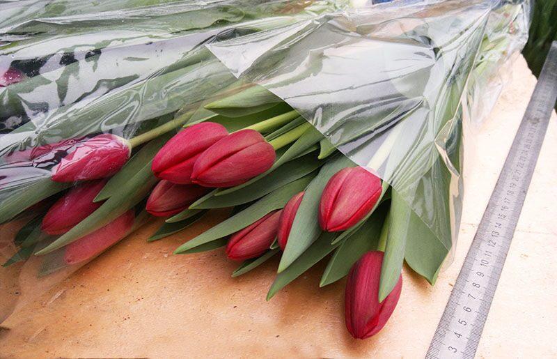 Оптом тюльпаны москва